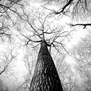 /thumbs/fit-320x320/2016-08::1470418826-black-and-white-branches-tree-high.jpg